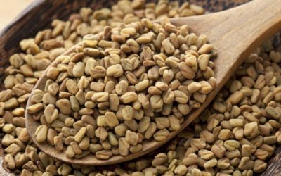 Fenugreek – History, Uses, Benefits, and Side Effects
