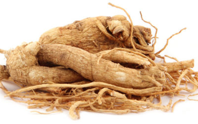 Panax Ginseng: Uses, Side Effects and Dosage
